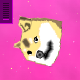 doge-spinning-during-1-day