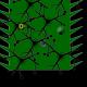 bug-swatter